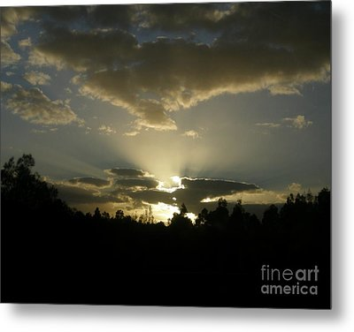 Metal Print featuring the photograph Awakening by Bev Conover