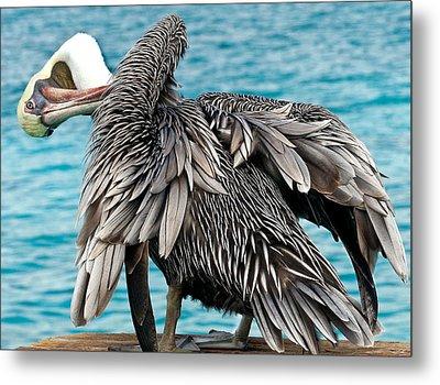 Awkward Pelican Metal Print by Jean Noren