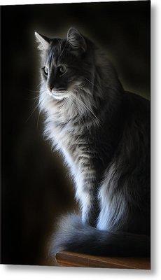 Backlit Kitty Metal Print by Carolyn Fletcher