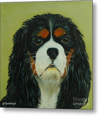 Metal Print featuring the painting Cavalier King Charles Spaniel by Shelia Kempf