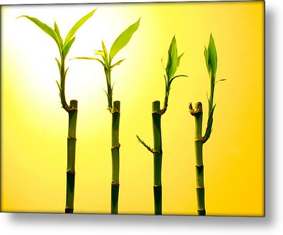 Bambo Metal Print by Mechi