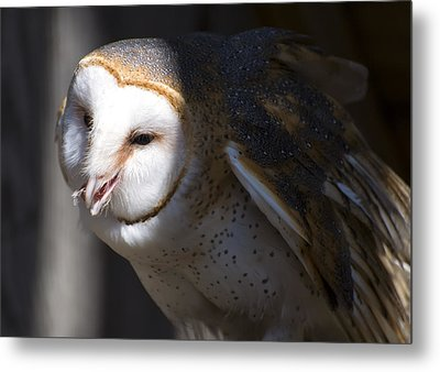 Barn Owl 1 Metal Print by Chris Flees