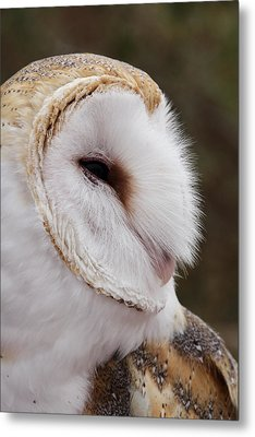 Barn Owl Profile Metal Print by Theo