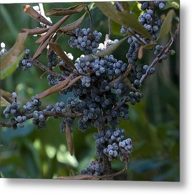 Bayberry Metal Print by Michael Friedman
