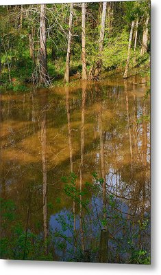Bayou Reflections Metal Print by Connie Fox