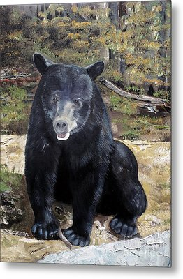 Bear - Wildlife Art - Ursus Americanus Metal Print by Jan Dappen
