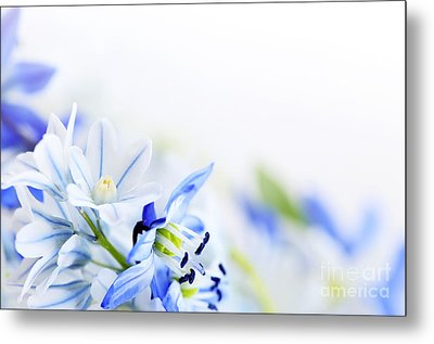 Beautiful  Blue Flower Art Metal Print