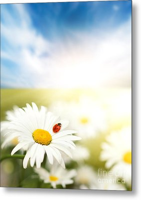 Beautiful Ladybug And Beautiful Flower Metal Print by Boon Mee