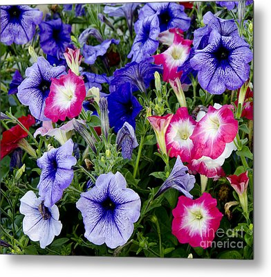 Beautiful Summer Annuals Metal Print by Wilma  Birdwell