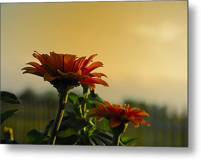 Beauty Of Nature Metal Print by Charles Beeler