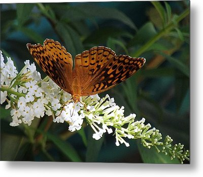 Beauty Of Nature Metal Print