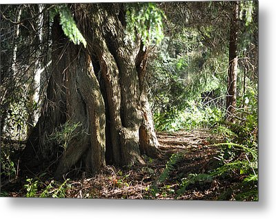 Been Around Awhile Metal Print by Ronda Broatch
