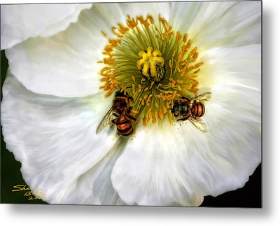 Bees On A Flower Metal Print by Sharon Beth