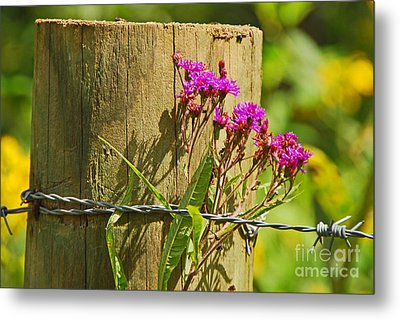 Behind The Fence Metal Print by Mary Carol Story