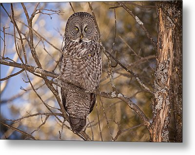 Being Observed Metal Print by Eunice Gibb
