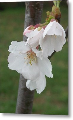 Bell Blossoms Metal Print by Wide Awake Arts