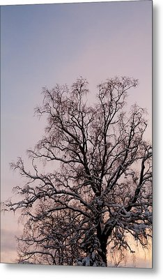 Bergen  Winter Tree Metal Print by Hakon Soreide