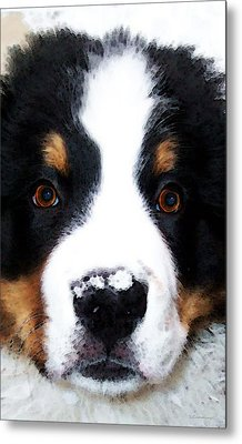 Bernese Mountain Dog - Baby It's Cold Outside Metal Print by Sharon Cummings
