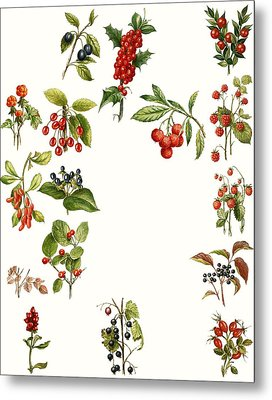 Berries Metal Print by English School