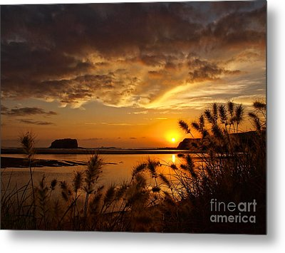 Metal Print featuring the photograph Beyond The Reeds by Trena Mara