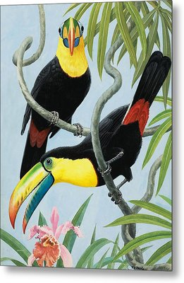 Big-beaked Birds Metal Print by RB Davis