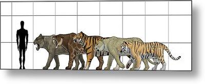 Big Felines Size Chart Metal Print by Vitor Silva