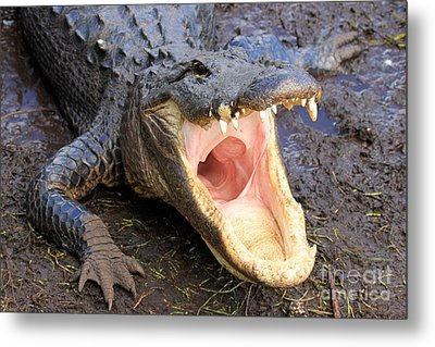 Big Mouth Metal Print by Adam Jewell