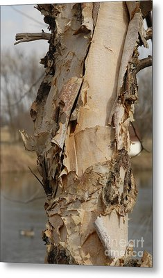 Metal Print featuring the photograph Birch Tree By The River by Lena Wilhite