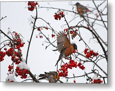 Bird And Berries Metal Print