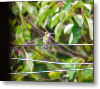 Metal Print featuring the photograph Bird On A Wire by Nick Kirby
