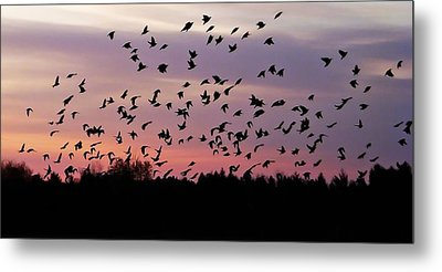 Metal Print featuring the photograph Birds At Sunrise by Aimee L Maher Photography and Art Visit ALMGallerydotcom