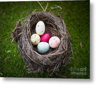 Bird's Nest With Easter Eggs Metal Print by Edward Fielding