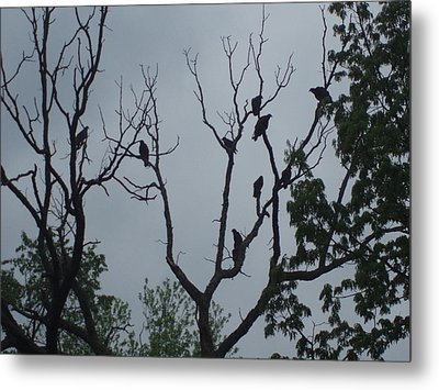 Metal Print featuring the photograph Birds by Fortunate Findings Shirley Dickerson