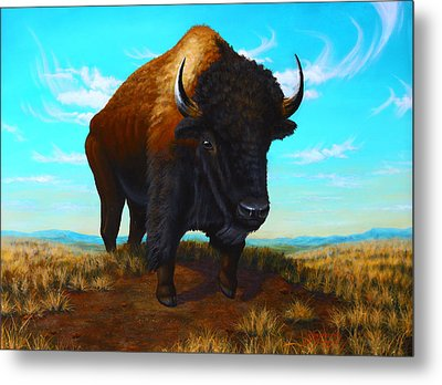 Bison On The Knoll Metal Print by Clay Hibbard