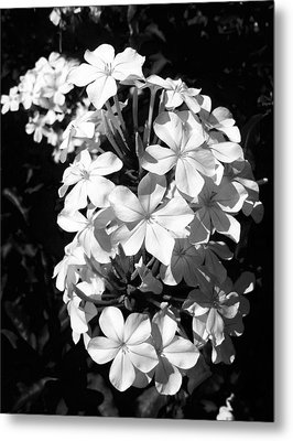 Metal Print featuring the photograph Black And White Beauty by Alohi Fujimoto