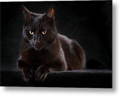 Black Cat Metal Print by Dirk Ercken