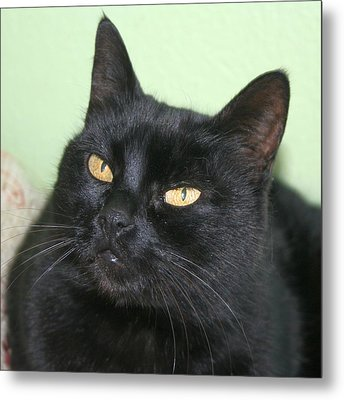 Black Cat Metal Print by Tracey Harrington-Simpson