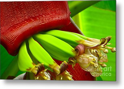 Metal Print featuring the photograph Blooming Bananas by Joy Hardee