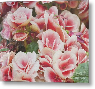 Blooming Roses Metal Print