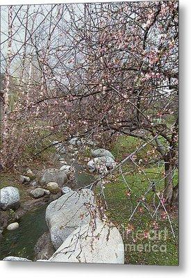 Blossom Brook Metal Print