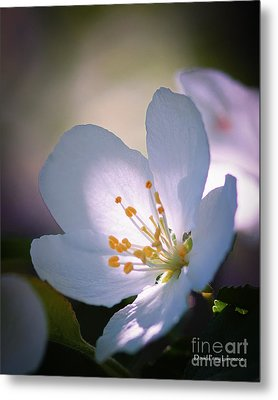 Blossom In The Sun Metal Print by David Perry Lawrence