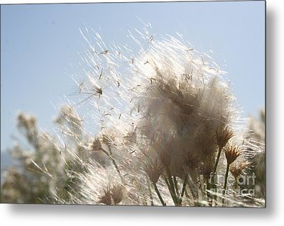 Metal Print featuring the photograph Blow Me Away by Julie Lueders