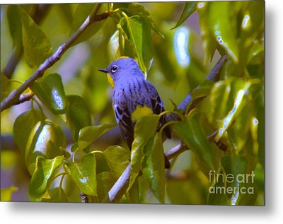 Blue Bird With A Yellow Throat Metal Print by Jeff Swan