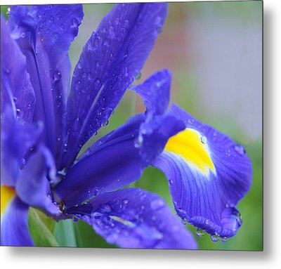 Metal Print featuring the photograph Blue Iris by Haleh Mahbod