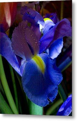 Blue Iris Metal Print by Joann Vitali