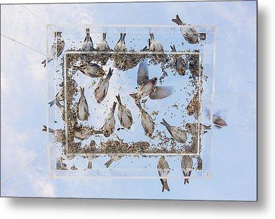 Blue Skies Above The Bird Feeder Metal Print by Tim Grams