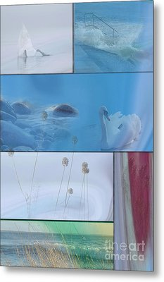 Metal Print featuring the photograph Blue Swan Collage by Randi Grace Nilsberg