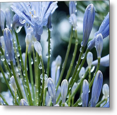 Metal Print featuring the photograph Blue Water Drops -3  by Haleh Mahbod