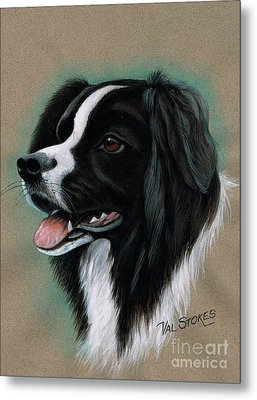 Border Collie Metal Print by Val Stokes