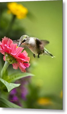 Botanical Hummingbird Metal Print by Christina Rollo
